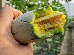 果农水果货源 果园直发 微商电商水果货源图片
