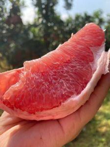 平和管溪三红蜜柚一手货源 红心柚货源  电商微商柚子货源图片