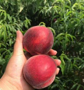 血丝蜜桃一手货源 血桃微商电商平台水果货源图片