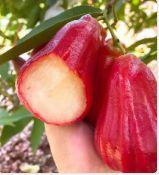 微商货源,生态水果,一件代发图片
